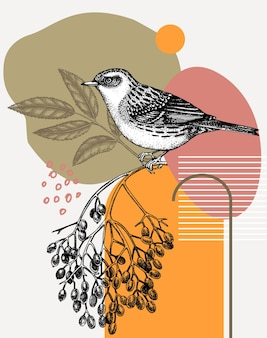 刻まれたスタイルで手描きのカヤクグリのベクトル図