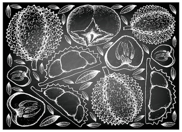 Hand drawn of durian and persimmon on chalkboard background