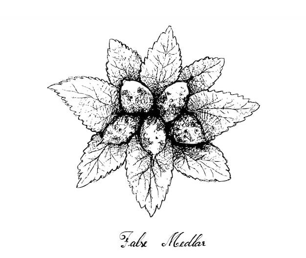 Hand drawn of dwarf whitebeam fruits on white background