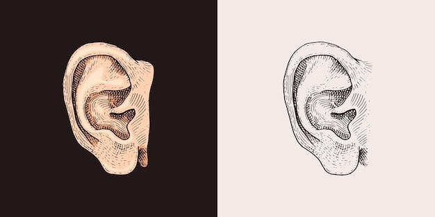 トレンディなスタイルで手描き耳スケッチシンボルベクトルリスン要素