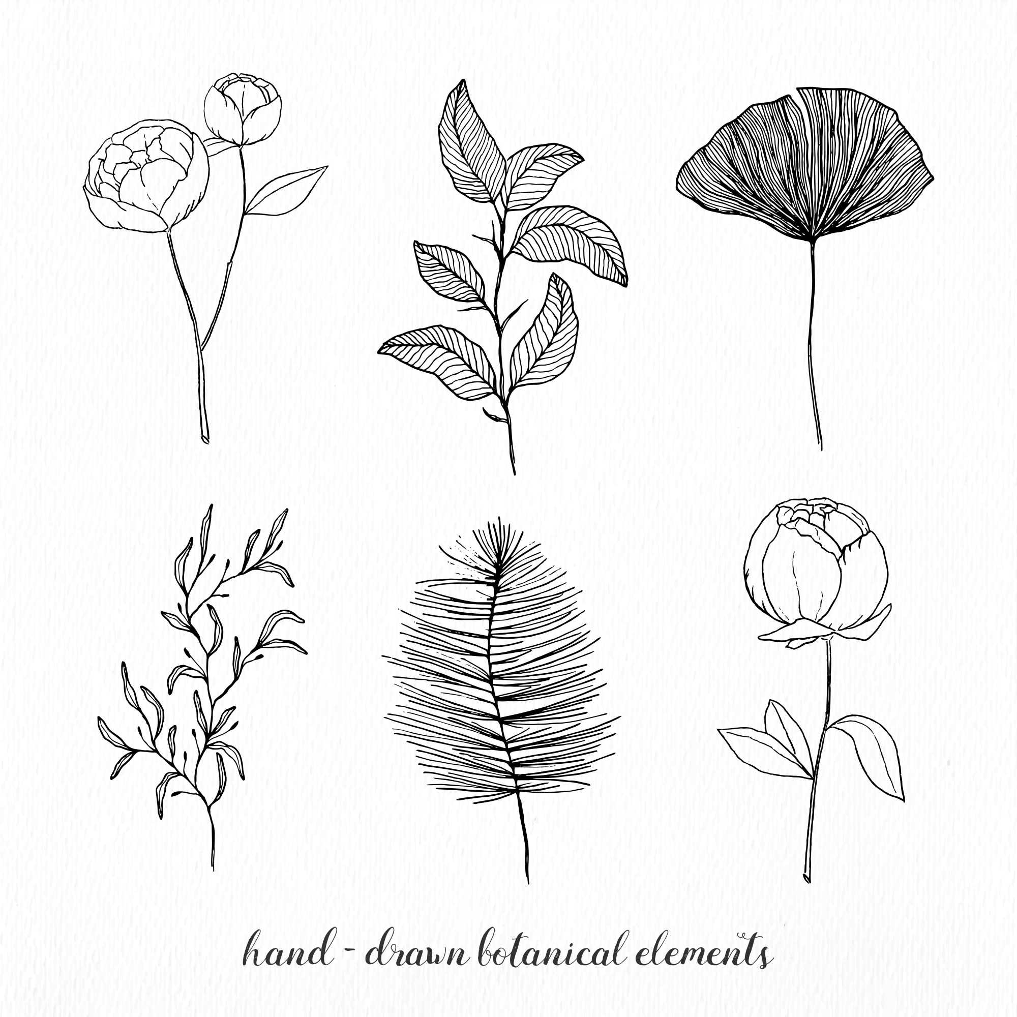 Hand drawn elegant botanical elements