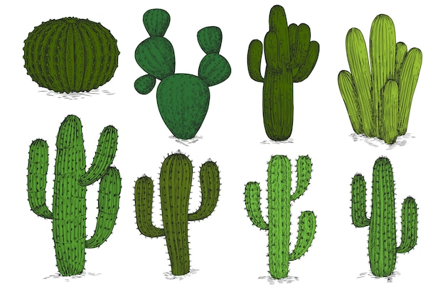 Hand drawn engraving cactus  set  on white background