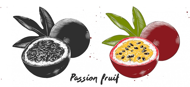 Hand drawn etching sketch of passion fruit