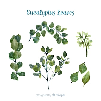 Hand drawn eucalyptus branches collection