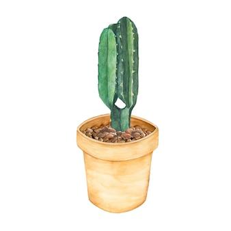 鉢の中に手描きのユーフォビアが入っているカンデラブラの木
