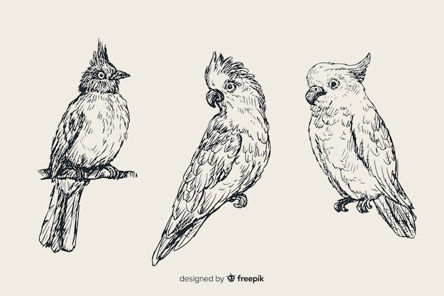 Hand drawn exotic bird collection