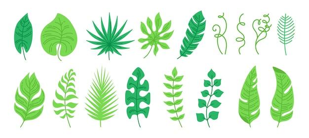 Hand drawn exotic leaves set
