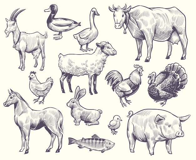 Hand drawn farm animals and birds
