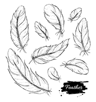 Hand drawn feather.
