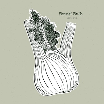 Hand drawn fennel