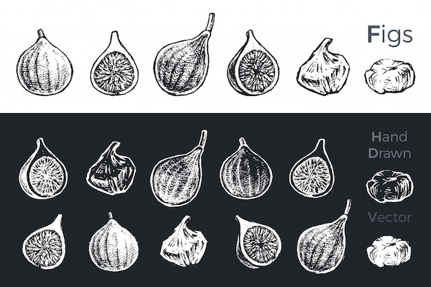 Hand drawn fig icons.