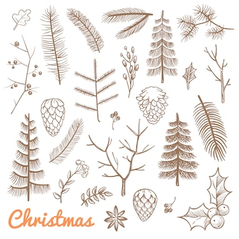 Hand drawn fir and pine branches, fir-cones. christmas and winter holidays doodle vector design elements. branch of pine and evergreen plant illustration