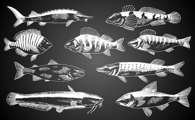 手描きの魚。魚介類店店ポスター。レストランの魚メニューや釣りクラブの背景バナーとして使用できます。マス、コイ、マグロ、ニシン、ヒラメ、カタクチイワシのスケッチ