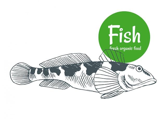 손으로 그린 물고기. 생선 및 해산물 제품 매장 포스터. 바다 음식 어업과 바다 낚시 캐치. 식당 생선 메뉴 또는 낚시 클럽 배너로 사용할 수 있습니다