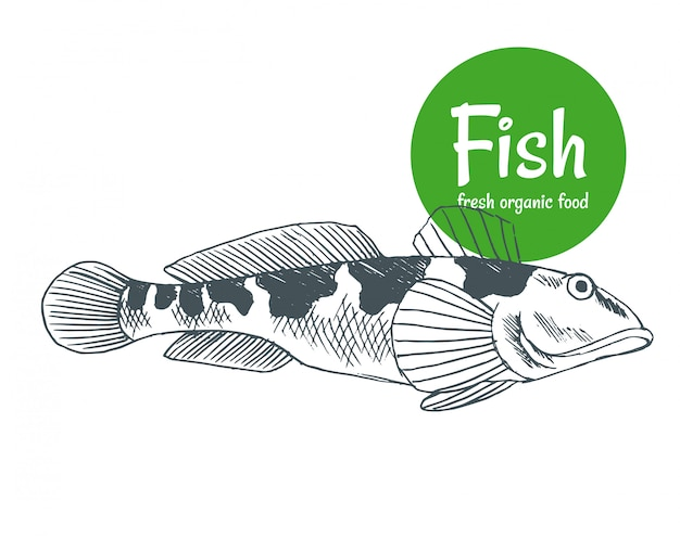 Hand drawn  fish. fish and seafood products store poster. sea food fishery and ocean fishing catch. can use as restaurant fish menu or fishing club banner