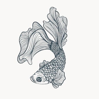 Hand drawn fish illustration