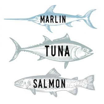 Ручной обращается рыба. эскиз лосось, тунец, марлин. иллюстрация