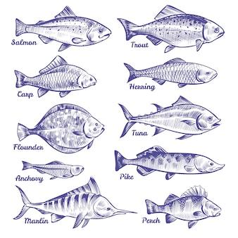 손으로 그린 물고기. 바다 바다 강 물고기 스케치 낚시 해산물 청어 참치 연어 멸치 송어 농 어 파이크