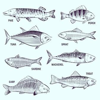 手描きの魚。レストランメニューシーフード、サーモン、マグロ、サバスケッチベクトル分離要素