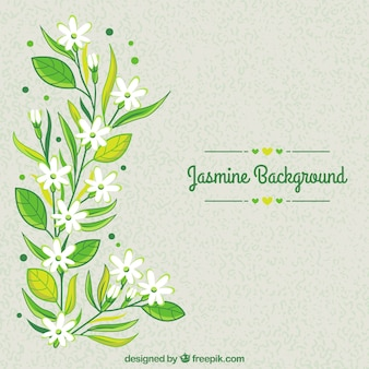 Hand drawn floral background with jasmine