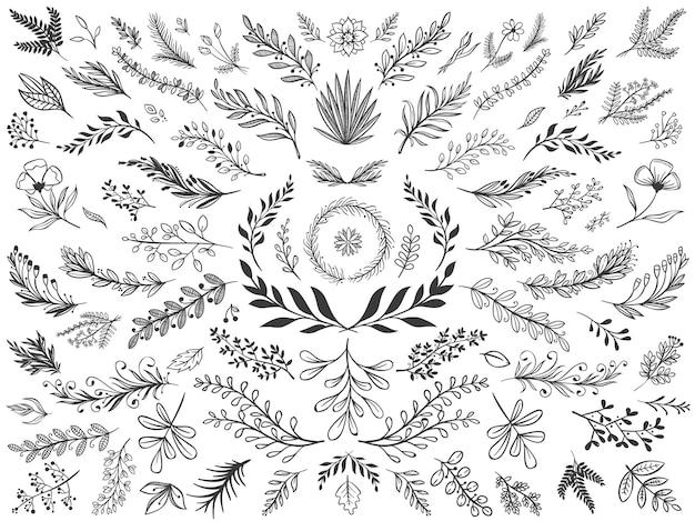 Hand drawn floral decor leaves. sketch ornamental branches, decorative leafs and flowers illustration set.