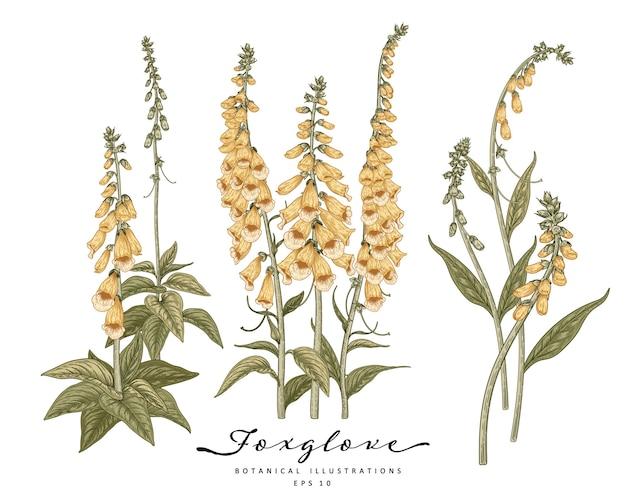 노란색 디기탈리스 꽃 세트의 손으로 그린 꽃 장식 흰색 배경에 고립.