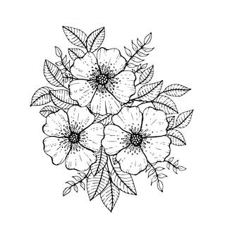 手描き花落書き。本の着色のページ。線画