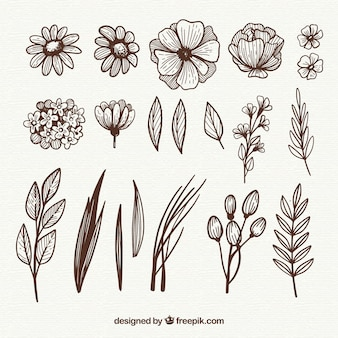Hand drawn floral elements with sketchy style