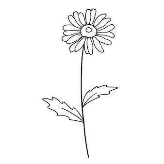手描きの花デイジー