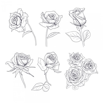 Hand drawn flower set rose collection
