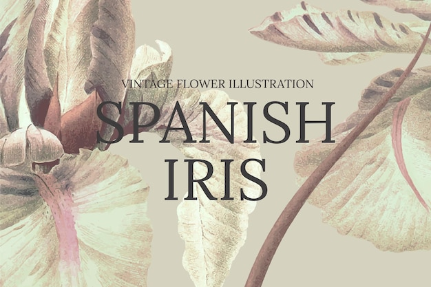 Modello di fiore disegnato a mano con sfondo di iris spagnolo, remixato da opere d'arte di pubblico dominio