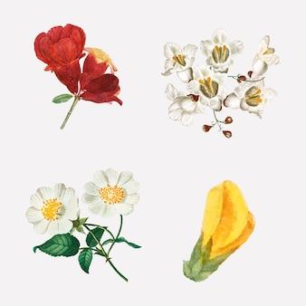 Illustrazione botanica d'annata stabilita di vettore del fiore disegnato a mano