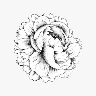 손으로 그린 꽃