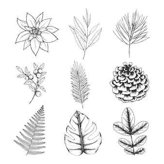 Hand drawn flowers, berries leaves and pine cones