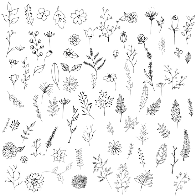Flower Outline Vectors, Photos and PSD files
