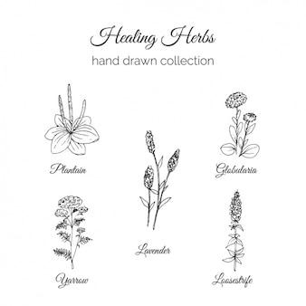 Hand drawn flowers collection