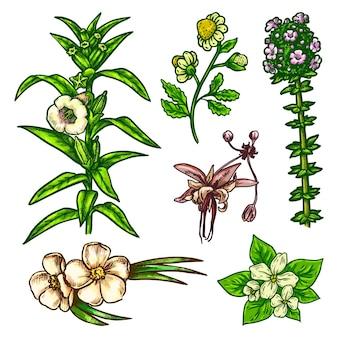 Рука нарисованные цветы эскиз векторные иконки наброски