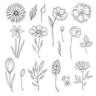손으로 그린 꽃. 식물의 다양한 사진. 꽃과 식물, 꽃 잎 스케치의 그림