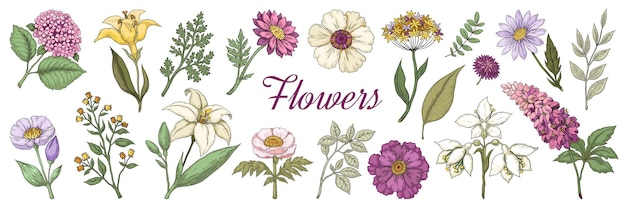 손으로 그린 꽃.