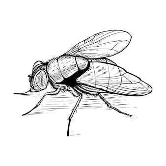 Hand drawn fly