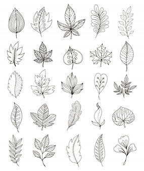 Hand drawn foliage monochrome set