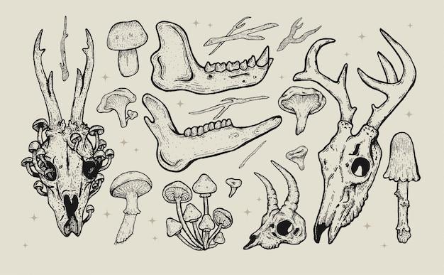 手描きの森イラストビンテージセット。動物の頭蓋骨のアートワーク、野生の花、植物、キノコ。