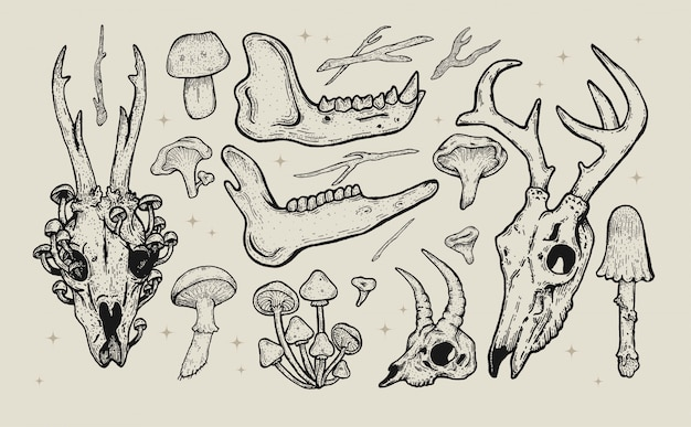 Hand drawn forest illustration vintage set. animal skulls  artwork, wild flowers,plants and mushrooms.