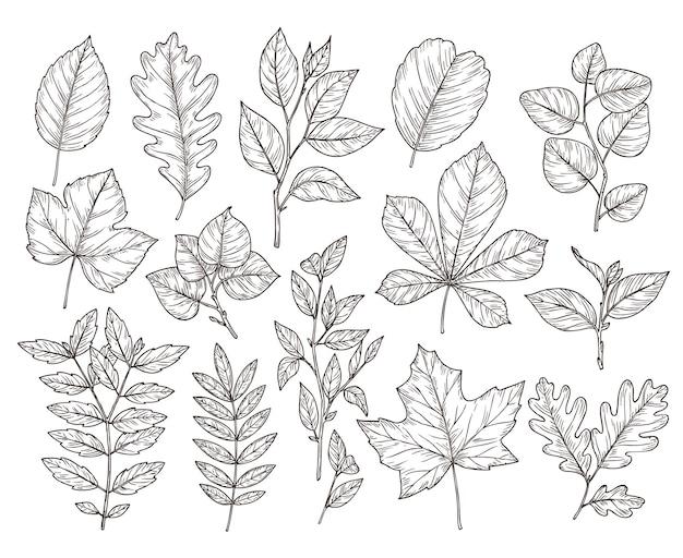 손으로 그린 숲 잎. 가 잎 스케치, 자연 요소입니다. 식물 오크 지점, 단풍과 식물 벡터 일러스트 레이 션. 가을 단풍 식물 그리기