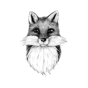Hand drawn fox isolated on white background