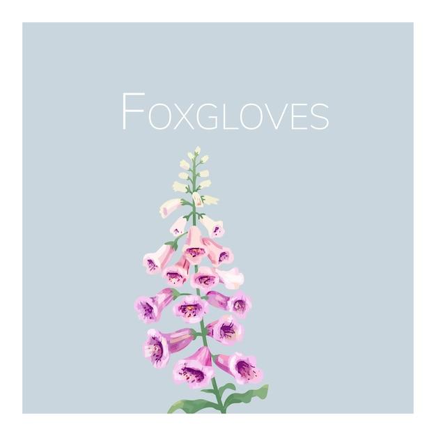 手描きの狐グローブの花のイラスト
