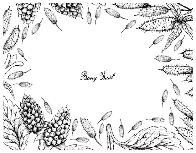 Hand drawn frame of amora verde berries and apple berry