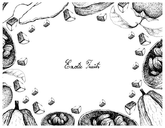 Hand drawn frame of australian black sapote and chayote
