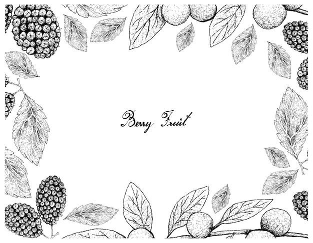 Hand drawn frame of canary beech and black mulberries
