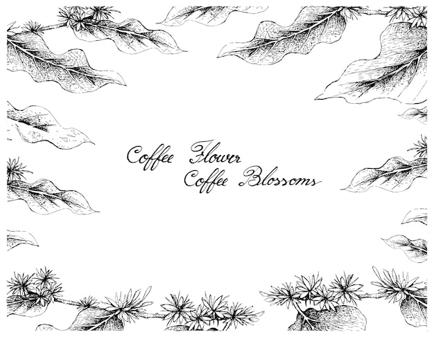 Hand drawn frame of coffee flowers on white background